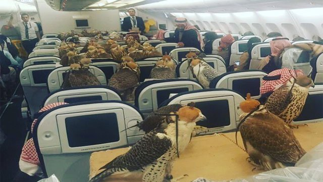 Of all the creatures on earth, the last animals that need plane tickets are birds, but one Saudi prince might disagree. (Photo Credit: lensoo)