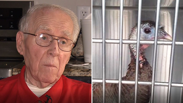 Bob Tallinger, 88, said he was fired from Walmart after a wild turkey wandered into the store. (Source: WISN via CNN)