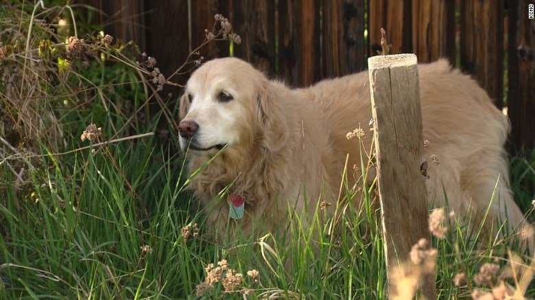 (Source: CNN) A Colorado dog owner is asking marijuana users to be more careful with their leftover pot.