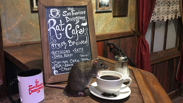 Rat cafe opens in San Francisco