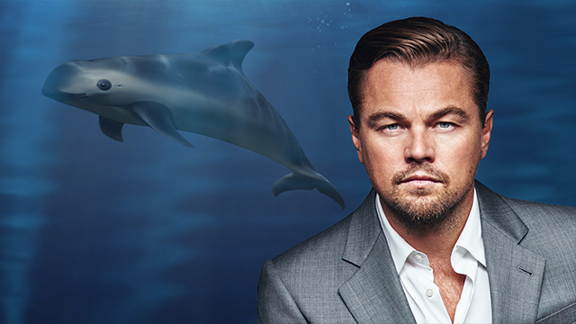Leonardo DiCaprio Wants to Save the Porpoises