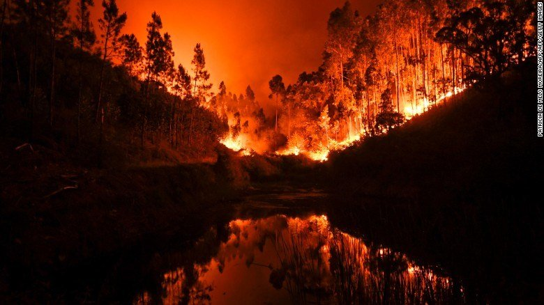 Portugal forest fires kills 24, many burn to death in their cars