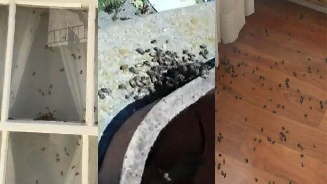 It's every homeowner's nightmare: unwelcomed guests. And we're not talking about your family members down on their luck. We're talking about the insect variety. (Photo: CNN)
