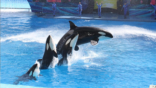 Federal agencies demand records from SeaWorld theme park