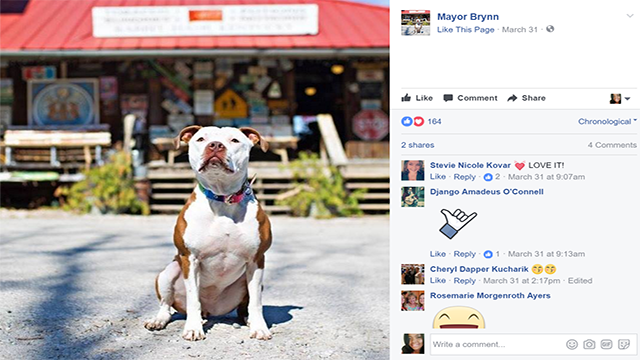 Bully for Brynneth, pawsome mayor of little town