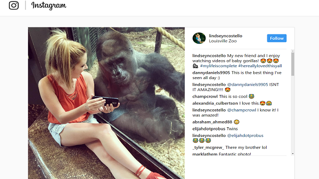 See Moment woman and gorilla watch videos on her phone