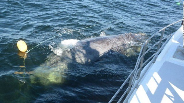 Howlett, 59, was killed Monday trying to disentangle a North Atlantic Right Whale off the coast of New Brunswick, according to a statement from Fisheries and Oceans Canada.