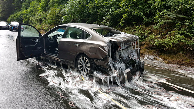 Truck full of eels leaves slippery mess on OR highway