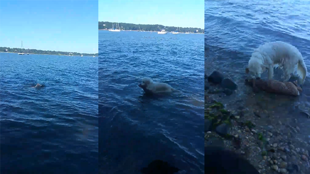 Dog pulls baby deer from water to save it from drowning