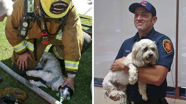 Using a pet oxygen mask donated to the department by a local Girl Scout troop, Smith and his partners slowly brought Jack back to life. (John Frando/Bakersfield Fire Department via AP)