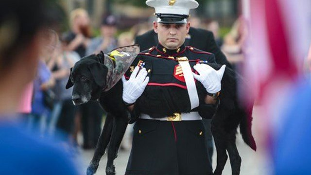 (Joel Bissell /Muskegon Chronicle via AP). U.S. Marine veteran Lance Cpl. Jeff DeYoung carries Cena a 10-year-old black lab who was a military service dog, aboard the LST 393 where he was put down on Wednesday, July 26, 2017 in Muskegon, Mich.