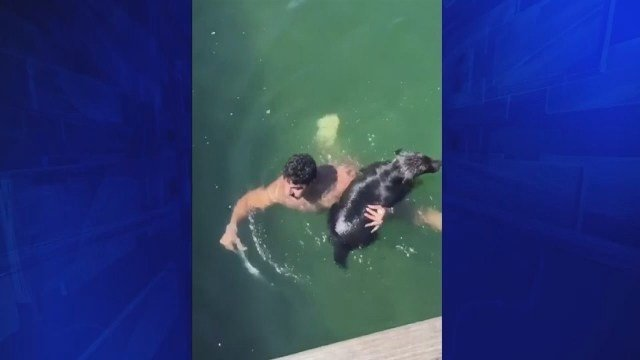Firefighter rescues dog struggling to swim