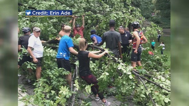 Mom and children hurt by falling tree