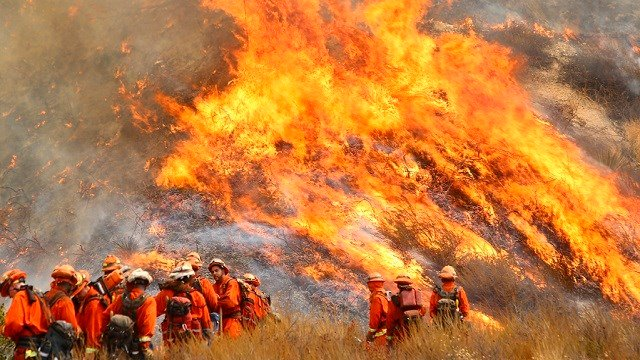 "A crew with California Department of Forestry and Fire Protection (Cal Fire) battles ""La Tuna"" brushfire on the hillside in Burbank, Calif.(Matt Hartman via AP)"