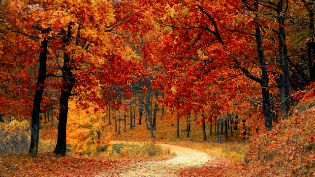 Fall, like all of the seasons, is caused by the Earth's tilt in relation to the sun. It gets warmer in each hemisphere when that hemisphere tilts toward the sun and colder when it leans away. (Pexels)
