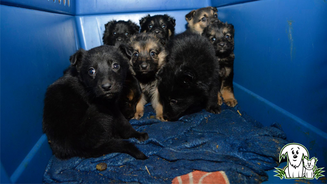 The Alberta Animal Rescue Crew Society (AARCS) saved 48 puppies and dogs from frigid temperatures in an Alberta town's dump. (Photo Credit: Facebook: Alberta Animal Rescue Crew Society)
