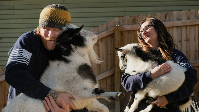 (Jeremy Wadsworth/The Blade via AP) In this Friday, Dec. 8, 2017 photo, Justin and Amanda Held with two of their three goats in Grand Rapids, Ohio. The couple, who say their three goats have helped ease the husband's depression, have been ordered...