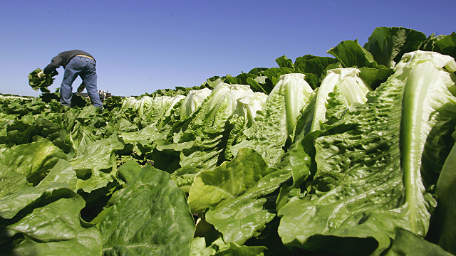 In this file photo from Aug. 16, 2007, a worker harvests romaine lettuce in Salinas, Calif.  (AP)