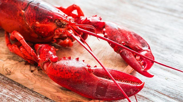 In a new law, the Swiss government has banned the common culinary practice of throwing the crustaceans into boiling water while they are still conscious.