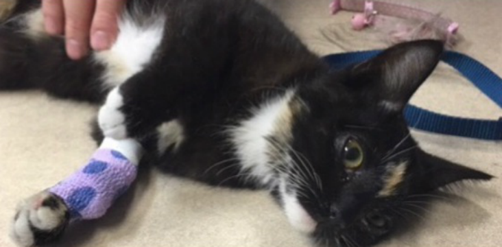 "Police say the kitten, who's been nicknamed ""Olive,"" is doing well but will need surgery and a lot of love. (Source: Fontana Police Department)"