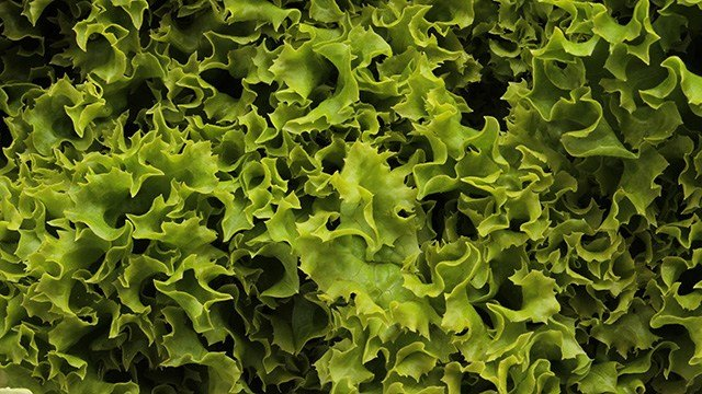 The woman said she bought a bag of store-brand romaine lettuce at a supermarket. She then found a 3-inch lizard in her salad.
