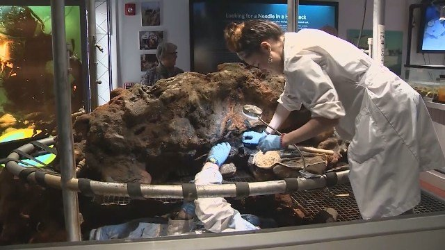 Bones of infamous pirate believed found