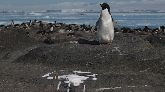 Researchers estimate the Danger Islands hold the largest colonies of Adelie penguins in Antarctica and the third- and fourth-largest colonies in the world. (Woods Hole Oceanographic Institution via CNN)