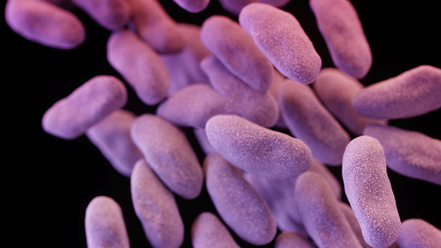 'Nightmare' bacteria cases found in 27 states, says CDC