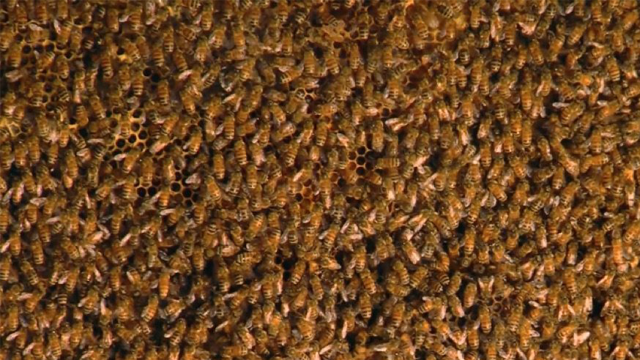 The Cincinnati Zoo and the owner of Morgan's Canoe helped rescue more than 50,000 honeybees thought to have been living in a garage since the early 1990s. (WCPO via CNN)