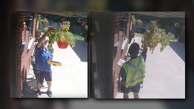 A security camera caught this mailman stealing tomatoes from a Montreal home. (Rob Morin/YouTube via CNN)