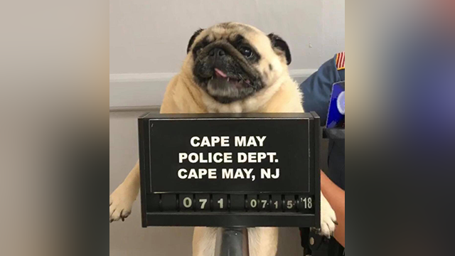 (Cape May Police Department)