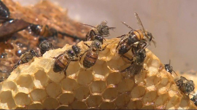 Thousands of bees attack, sting woman hundreds of times