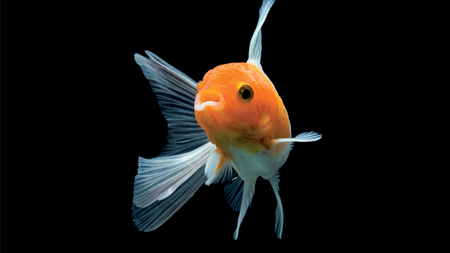 Homeowner selling home, moving out amid spat with HOA for having goldfish in driveway | WSMV 4