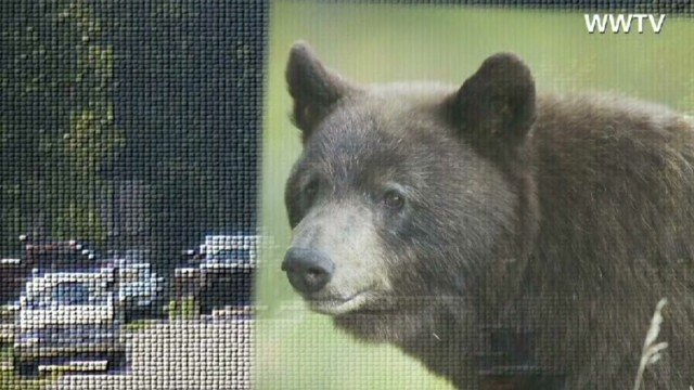 Bears rarely attack humans unless they feel threatened or territorial. But a 12-year-old girl jogging in Michigan is among the latest victims in a spate of bear attacks that has left seven people mauled in five states since Thursday. (CNN)