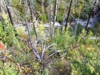 This is the terrain along the loop trail in Glacier National park where Cody Johnson fell. Photo taken by Paul Vercammen, Friday, September 13, 2013