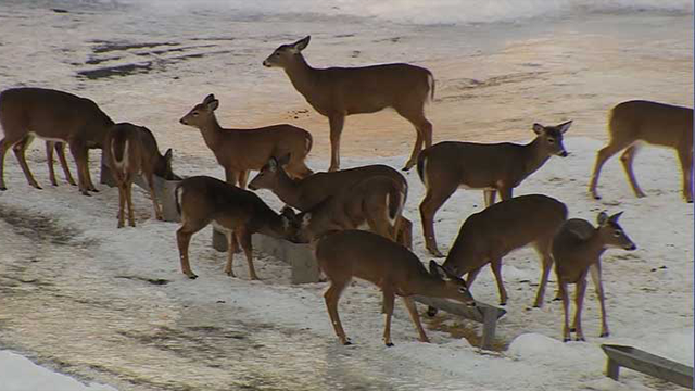 Former hunter spends thousands feeding herd of deer kctv5 for Glasplatte hinter herd