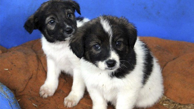 Pet Stores In Sacramento That Sell Dogs