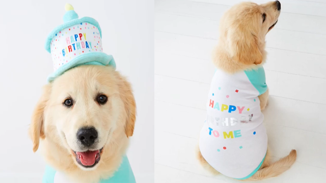 Kmart introduces birthday outfits for dogs wsmv news 4 photo kmart instagram bookmarktalkfo Images