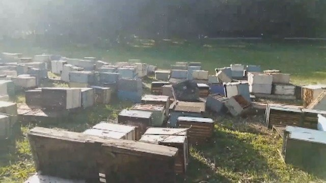 Vandals topple beehives, kill 200k bees