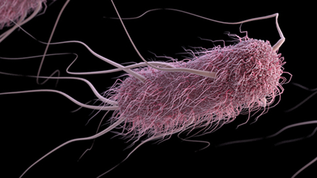 Escherichia coli (abbreviated as E. coli) are bacteria found in the environment, foods, and intestines of people and animals. E. coli are a large and diverse group of bacteria. (CDC)