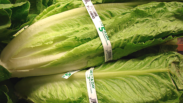 This undated file image shows lettuce at a Foodland grocery store in Maui. (File Image, Wikipedia Commons)