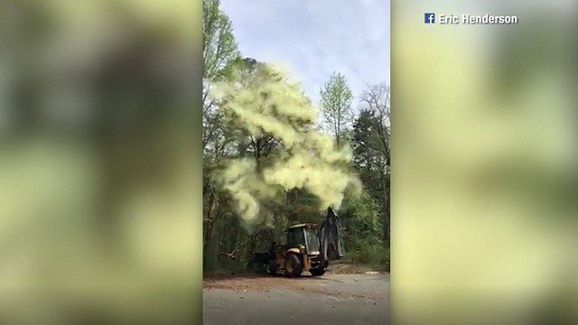 Pollen is so prominent in New Jersey that it exploded into a cloud when a bulldozer tapped a tree. (Eric Henderson/Facebook via CNN)