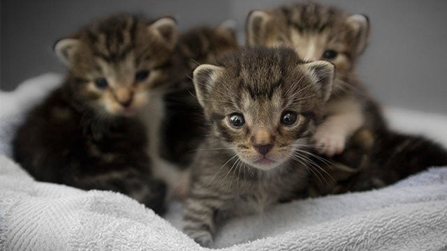 Animal shelter accused of freezing kittens to death