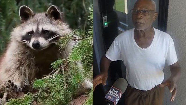 Ezra James, 88, of Florida, admitted to setting a raccoon on fire in his yard. He was taken to jail but released on bond. (WKMG via CNN Wire)
